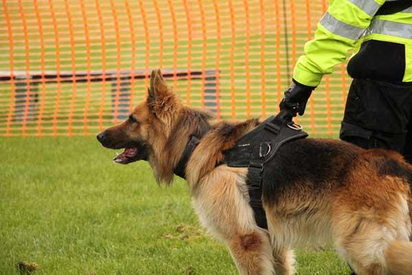 Dog Security K9 security image